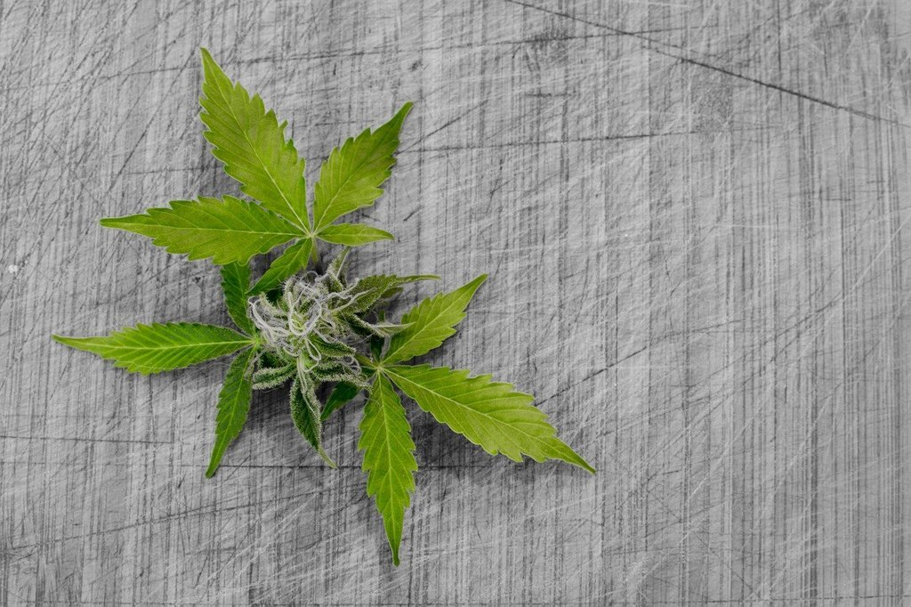 An image of marijuana, illegal drugs in the us, why are drugs illegal in the us, where do most illegal drugs in the US come from, why drugs are illegal in the us, dr